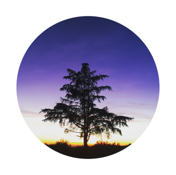 cropped-purple-tree.png
