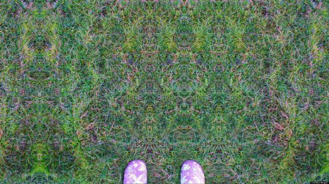 lsd grass