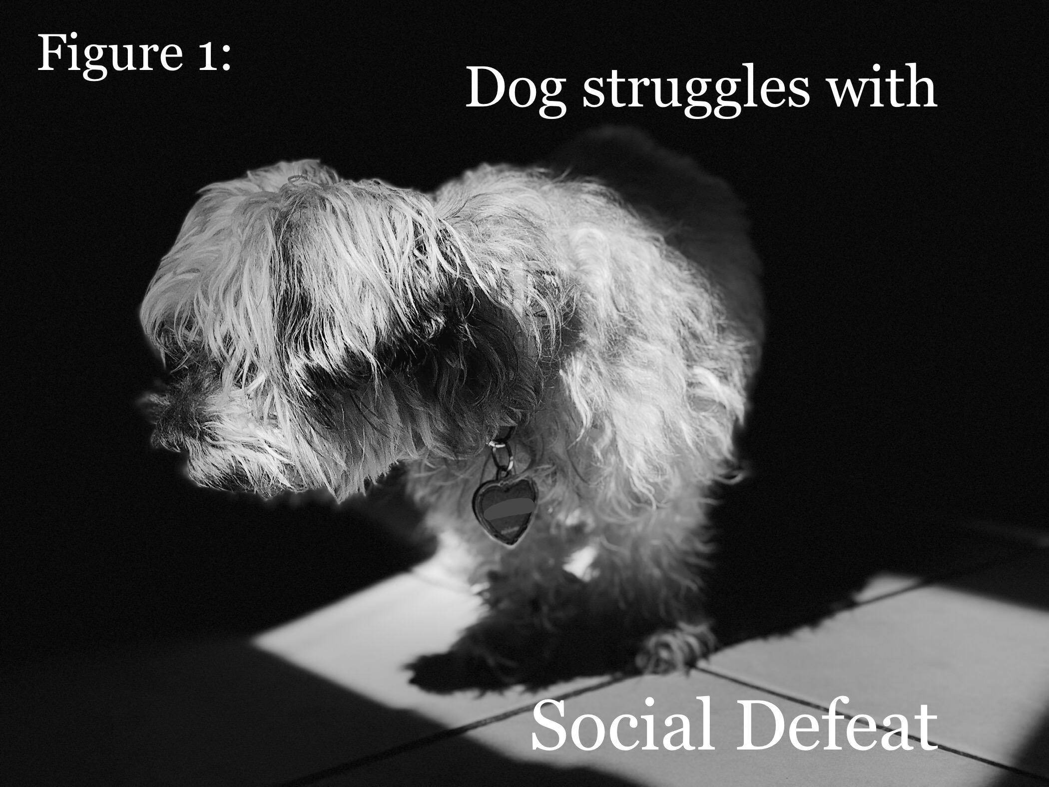 socialdefeat.jpg