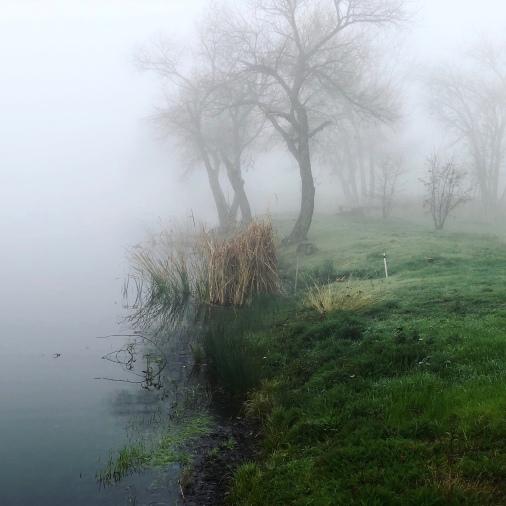 pandemic fog2
